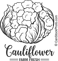 Hand drawn cauliflower icon. Vector badge vegetable in the...