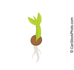 Plant seedling germination - Young plant seedling...