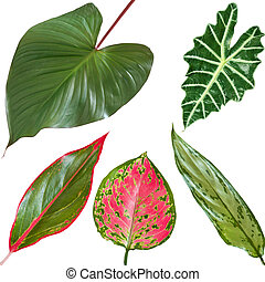 bright tropical leaves - bright colored tropical leaves on a...