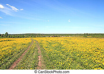 rural road through field