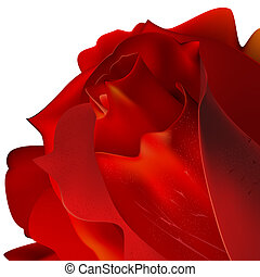 Rose on a white background Clipping Mask
