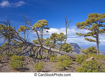 West Gran Canaria