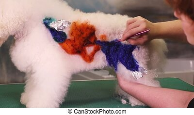 Groomer makes application on a dog - Dog groomer makes...