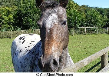 Folly Farm - pony in a field