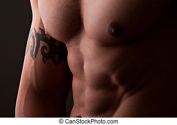 muscular male torso - muscular male chest and abdomen...
