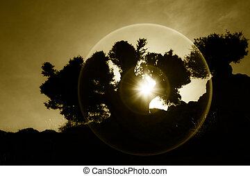 Sunset through tree in the desert - Sunset or sunrise...