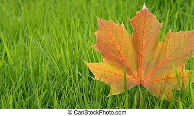 Ősz, levél növényen