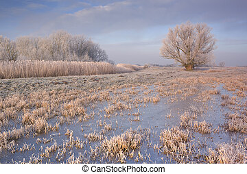 Frozen landscape in The Netherlands in early morning...