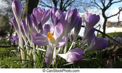 Beautiful purple flowers. - London. England. United Kingdom....
