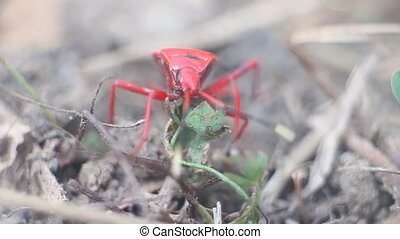 Unusual insects. Red bug