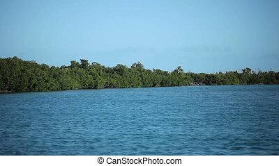 Mangrove plants in a sea at sunny day