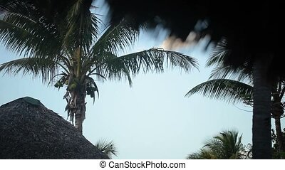 Coconut palm at the beach shot