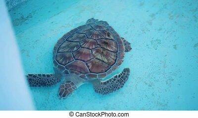 Water turtle swimming in sea