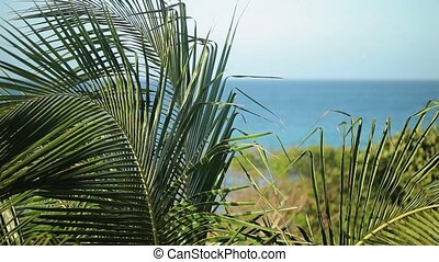 Palm leaves on a beach