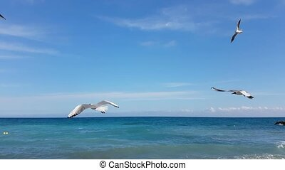 Seagulls Flying At The Sea