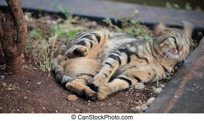 Cat laying outdoors - Tabby cat laying outdoors on the...