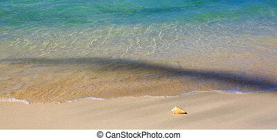 Sea shell on Caribbean beach. - Seashell on beach and sea...
