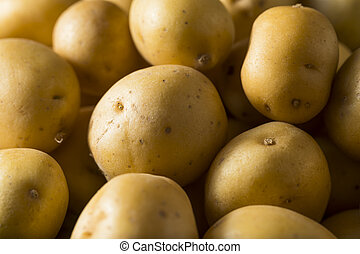 Raw Organic Baby Gold Potatoes Ready to Eat