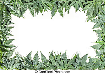 Green cannabis leafs frame with usable copy space in the...