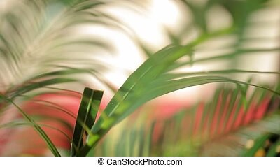 Palm leaves closeup at windy day