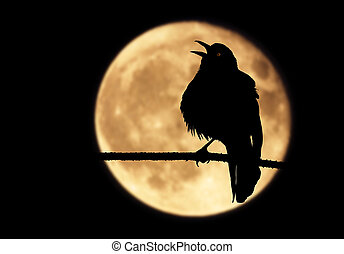 Rave Silhouette In Moon - A silhouette of a raven perched on...