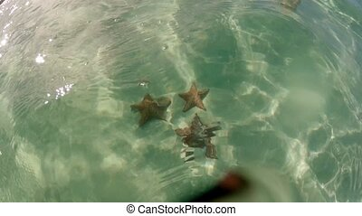 Three starfish underwater in the sea