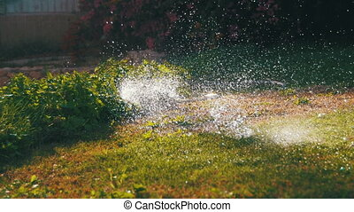 Automatic Lawn Sprinkle on the Garden Green Grass. Garden...