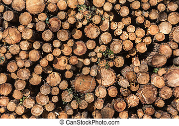 Pile of tree trunks - Background of tree trunks pile in...