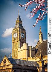 Big Ben in London at spring - Big Ben tower in London at...