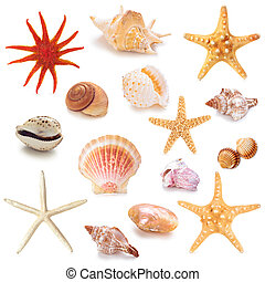 Collection of seashells. - Collection of different seashells...