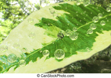Green leaf of a ficus with water droplets