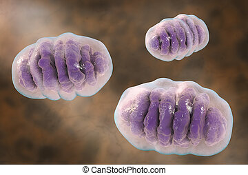 Mitochondrion, cellular ogranelles which produce energy -...