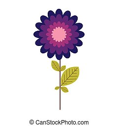 colorful stem with leaves and echinacea purpurea flower...