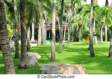 Garden decoration by palm trees, big rock green yard be...