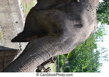 Elephant - Beautiful elephant at zoo in Palic, Serbian