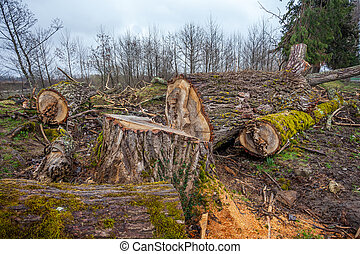 heap of sawn wood logs with rough bark closeup view.