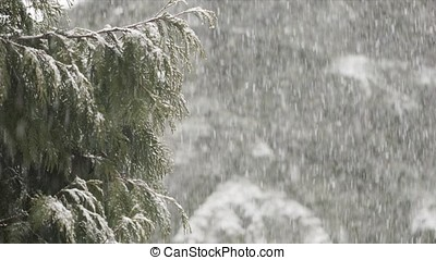 Heavy Snowstorm - Heavy snow falling with tree branches in...