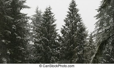 Snow Falling in Forest - Heavy snow falling with trees in...