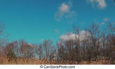 early spring forest Spring forest sky landscape
