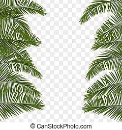 Summer green palm leaf transparent