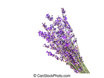 Bunch of lavender. Isolated object. Element of design.