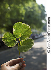 Hand holding green leaf with light background.