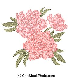 Hand drawn peony flowers isolated on white background. Vintage floral composition. Vector illustration