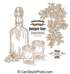 Juniper tree and old bottle gin vector illustration. Cones ans berries of Juniperus communis. Hand drawn alcohol set in sketch style