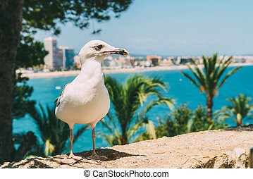 White Seagull Bird Portrait With Tropical City Skyline In...