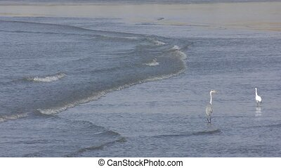 Birds on waves - Grey heron and little egret on small waves...