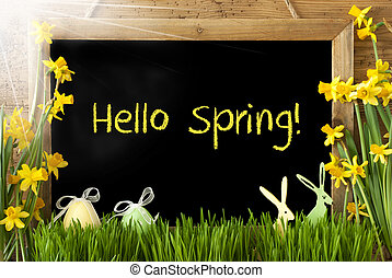 Sunny Narcissus, Easter Egg, Bunny, Text Hello Spring -...