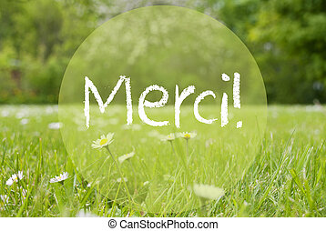 Gras Meadow, Daisy Flowers, Merci Means Thank You - French...