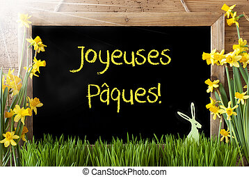 Sunny Narcissus, Bunny, Joyeuses Paques Means Happy Easter -...