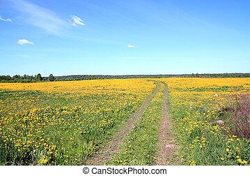 road on field